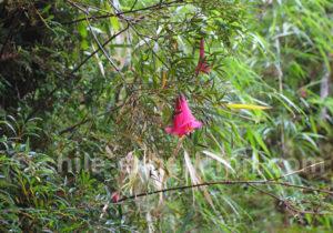Botanique en Patagonie