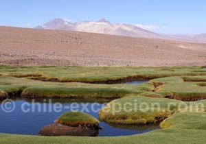 Parc Nevado Tres Cruces, région Atacama