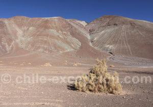 Explorer le parc national Nevado Tres Cruces