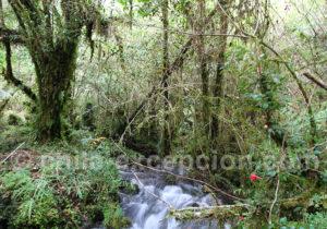 Nature parc Tagua Tagua