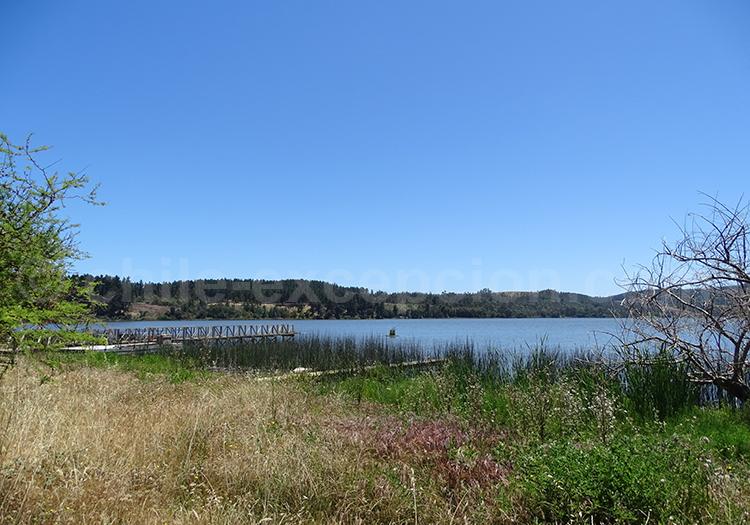 Humedal, Laguna Torca