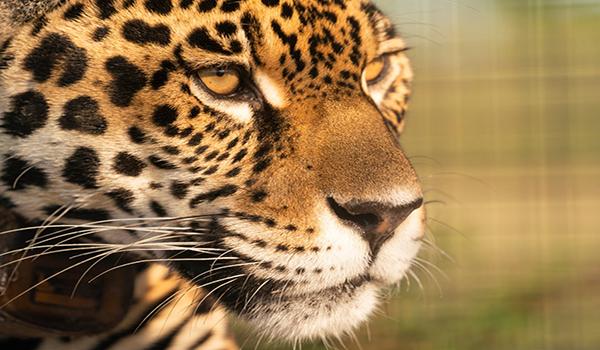 Fondation rewilding ©