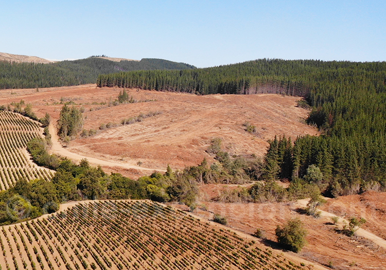 Culture forestière au Chili