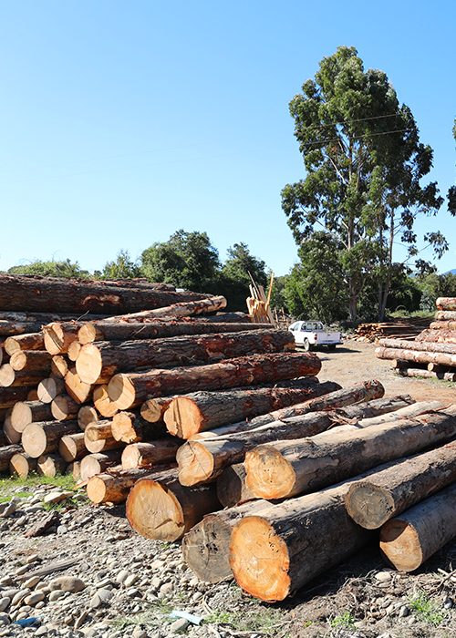 Economie du bois au Chili 1