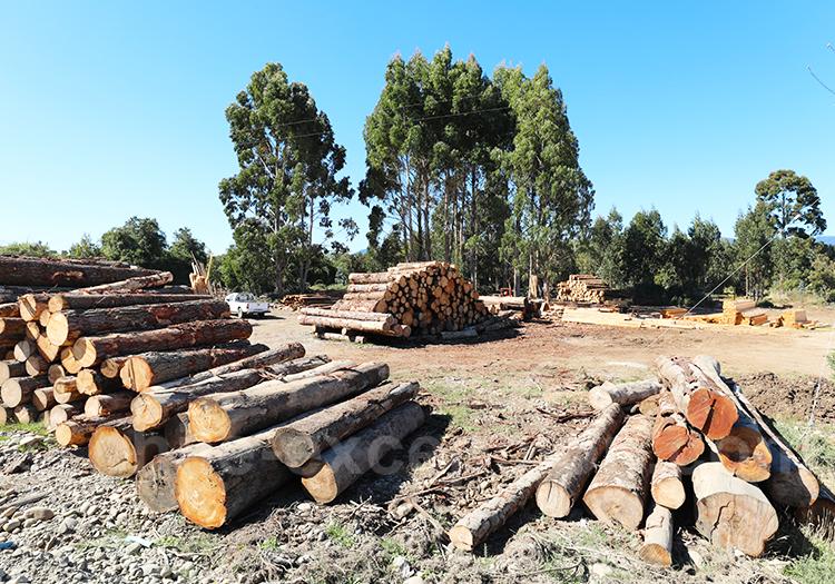Economie du bois au Chili