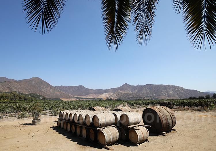 Les vallées viticoles du Chili