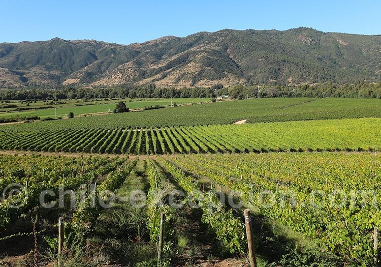 Vignoble Lurton, Chili