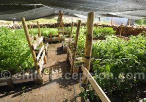 Produits bio Hacienda Araucano, vallée de Lolol