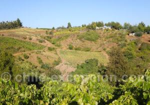 Route des vins dans le Biobio